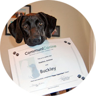 puppy holding certificate
