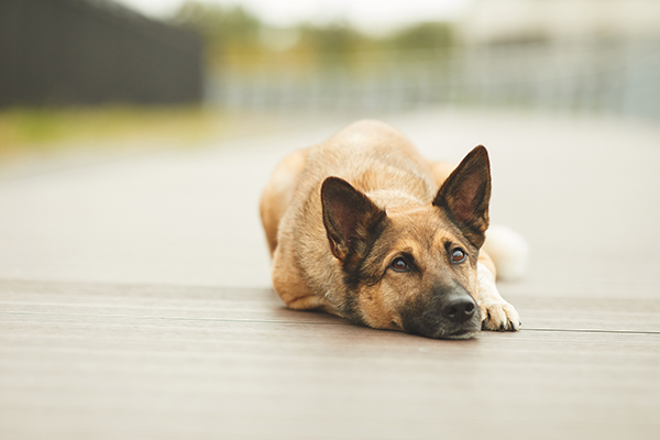 From Alpha to Understanding: A Dog Trainer's Journey