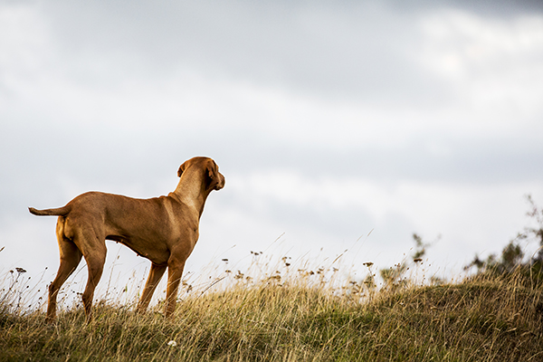 """""""Why?"""" And Other Questions To Ask When Training Your Dog"""
