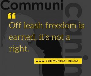 Off leash freedom is earned