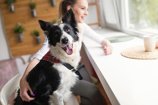 Proper Dog Etiquette