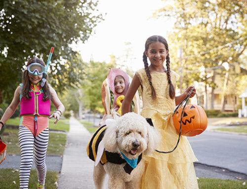 Bark Box Halloween Fun