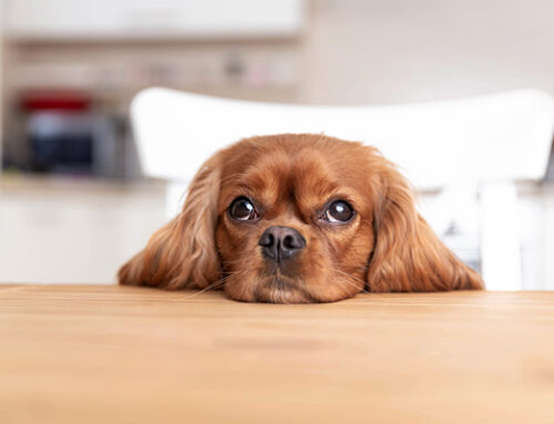 How Taking Advice From Other Dog Owners Can Harm Your Dog
