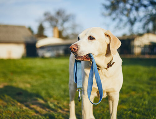 Teach Your Dog To 'Get Dressed'