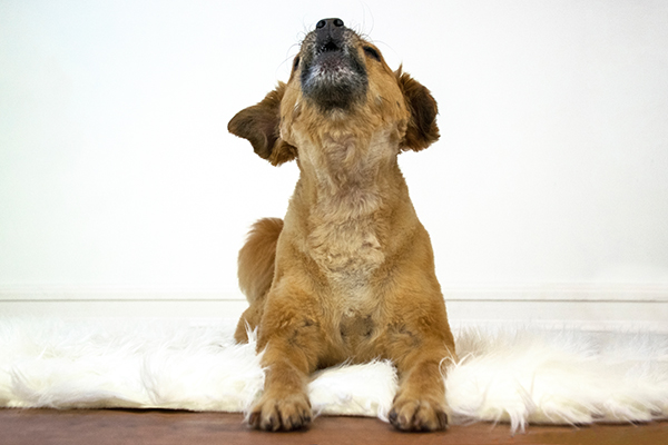 3 Tips to Help Reduce Barking When Your Dog is Alone