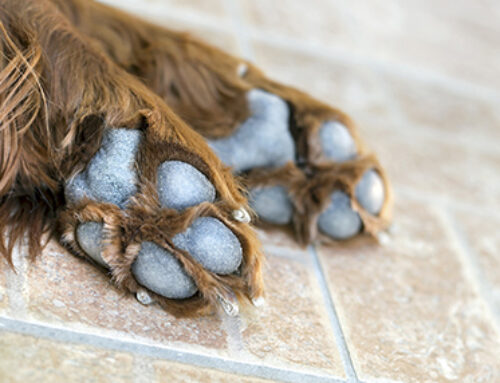 Cleaning Dirty Paws Made Easy????