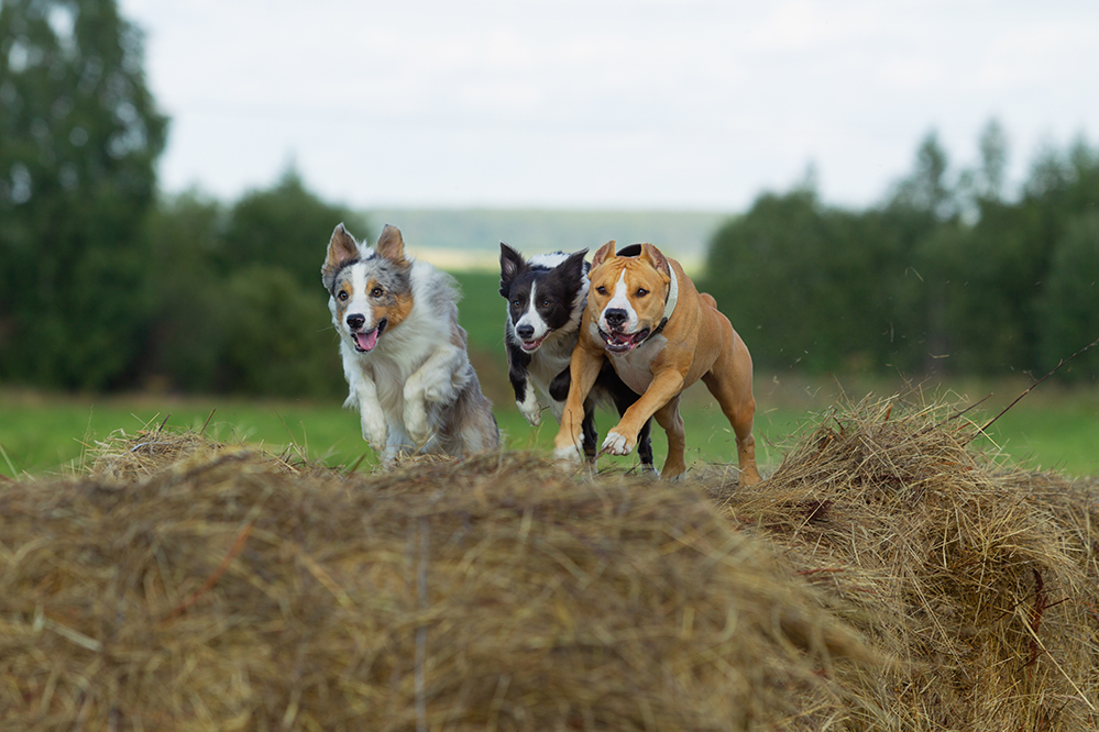 Dog Park Etiquette: Having A Ball…Or Just Stealing Everyone Else's