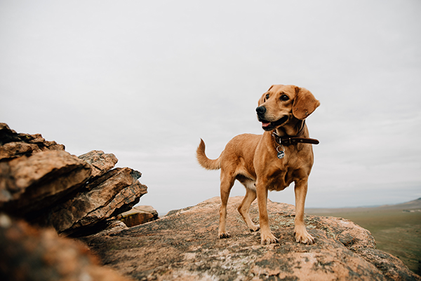 The Key to Successfully Training Your Dog