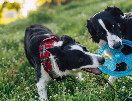 Should Dogs Be Left To 'Work It Out' On Their Own?