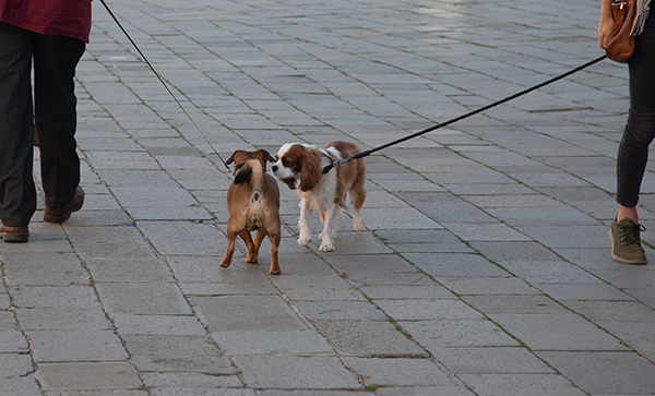 How to Safely Introduce Two Dogs On Leash