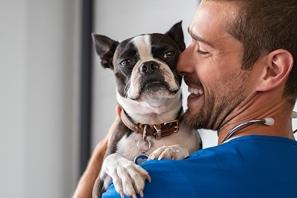 Why Visiting The Vet May Solve Your Dogs Problem Behaviour