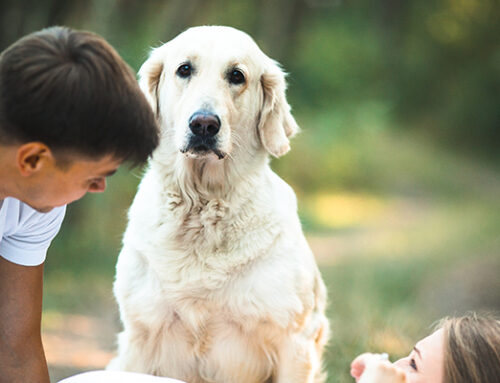 When Is Rehoming Your Dog The Best Option?