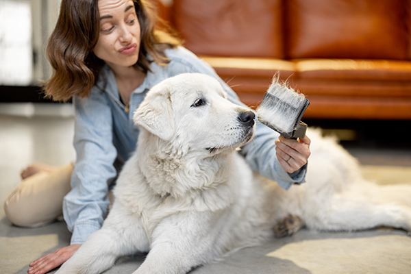 Getting Your Dog Comfortable Being Brushed